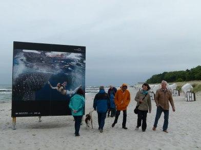 Giganten der Meere am Strand von Zingst (c) Frank Koebsch (5)
