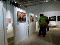 Wilde Tiere Deutschlands – Fotos von Dietmar Nill in der Zingster Multimediahalle © Frank Koebsch (2)