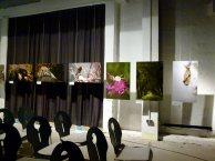 Wilde Tiere Deutschlands – Fotos von Dietmar Nill in der Zingster Multimediahalle © Frank Koebsch (4)
