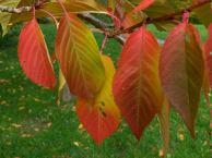 Bunte Blätter im Herbst am Schwanenteich in Rostock (c) Frank Koebsch