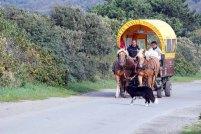 Gemütlich - Pferdefuhrwerk auf Hiddensee (c) FRank Koebsch