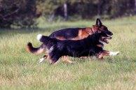Animal Soul -Tierfotografie - Ebby und Bo (c) Frank Koebsch (2)