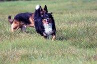 Animal Soul -Tierfotografie - Ebby und Bo (c) Frank Koebsch (3)