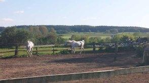 Pferde als Motiv in der alten Büdnerei (c) Frank Koebsch