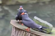 Aquarell Kurs im Rostocker Zoo in der Seevogel Volliere (c) Frank koebsch (5)