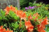 Aquarellkurs zur Rhododendren Blüten im Rostocker Zoo (c) Frank Koebsch (2)