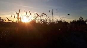 Abend über den Dünen am Darßer Ort (c) FRank Koebsch