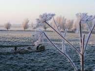 Verzaubert im Winter (c) FRank Koebsch