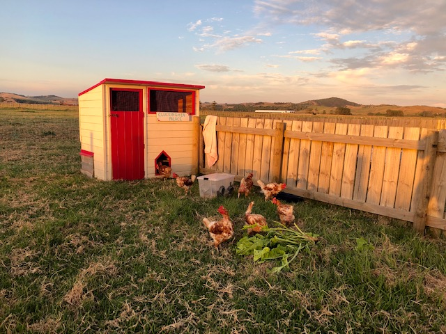 Looking for an amazing kid friendly pet??? 🐓🐔😍
