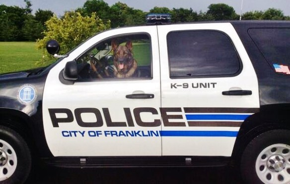 dog-driving-police-car