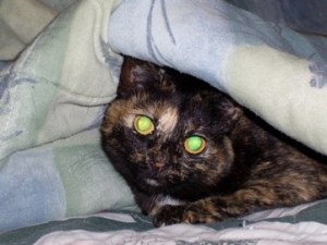 Frankly, My Dear . . . : Berry Under Covers