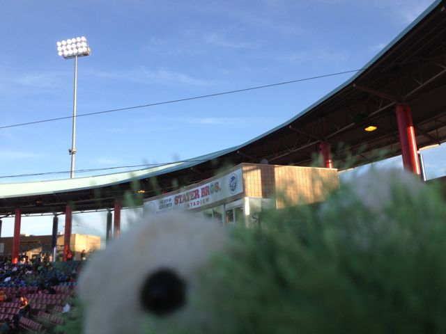 My stuffed frog photo bombed this picture of Stater Bros. Stadium.
