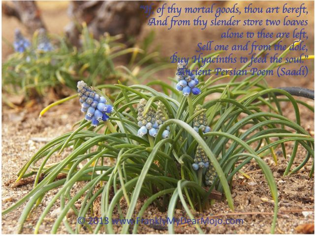 Hyacinth for the Soul: Ancient Persian Poem
