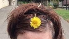 Frankly, My Dear . . . : Dandelion Hair