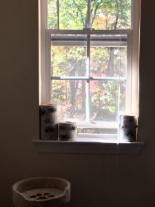 Frankly, My Dear . . . : A Window With a View