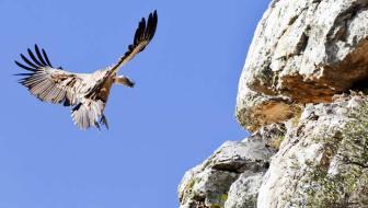 Op zoek naar gieren in de Gorges-de-la-Jonte