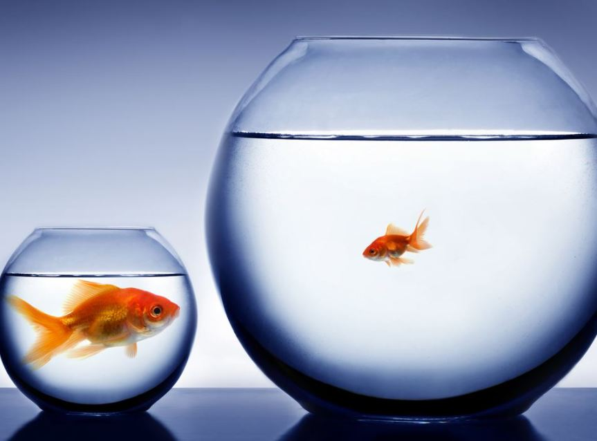 Big Fish, Little Pond or Little Fish, Big Pond? Regional Companies Need to Decide.