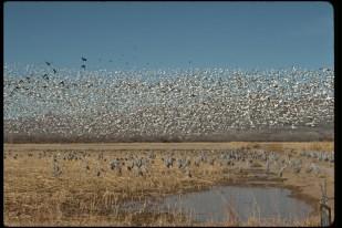 Two Flocks of Birds