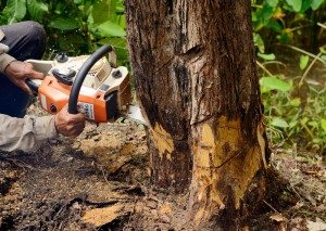 Coral Gables Tree and Stump Removal