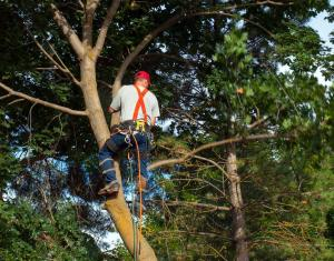 tree shaping , Tree Services Near Miami