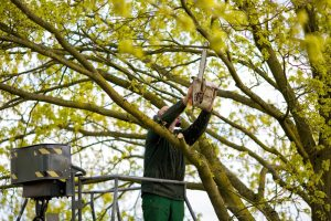 Tree Trimming Services in Pinecrest