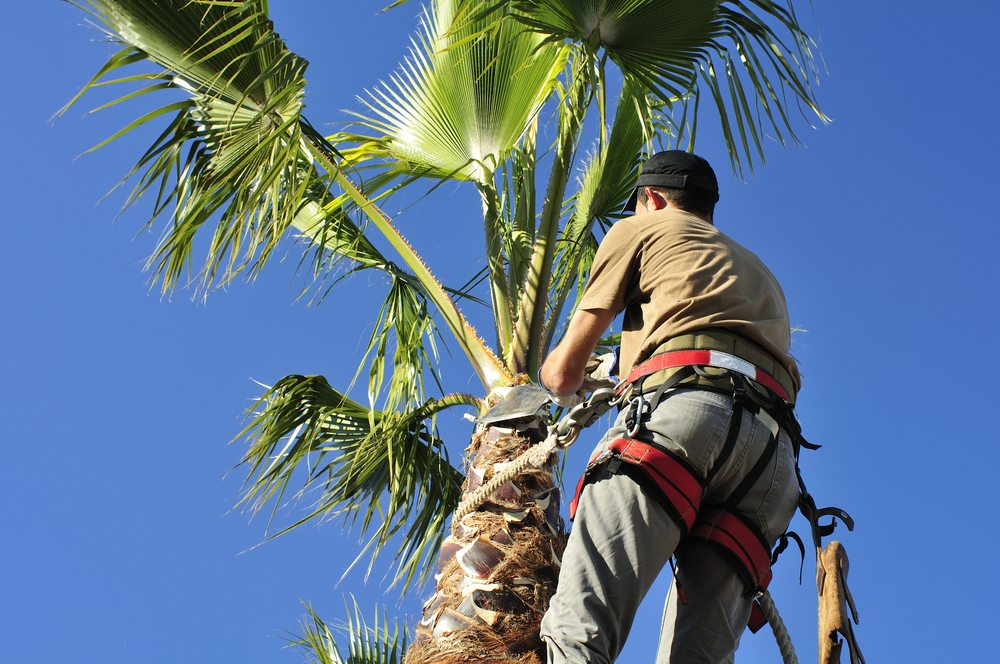 Tree Trimming Company , Tree Trimming in Pinecrest , Tree Trimming in Palmetto Bay