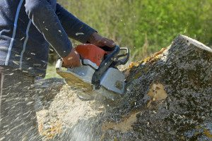 Coral Gables Stump Grinding Prices