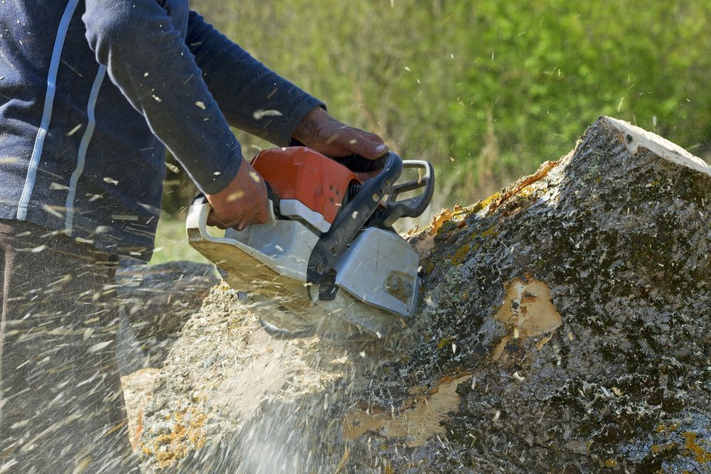 Stump Grinding Services Florida