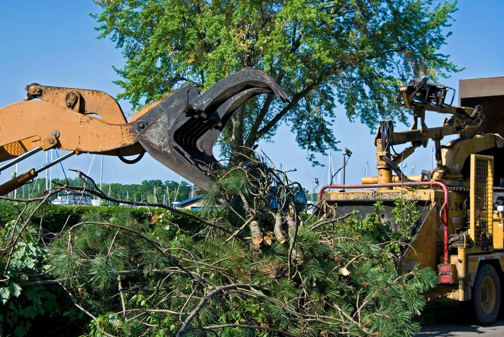 Green Cleanup Services , Landscape Debris Removal