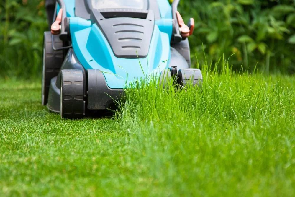 Lawn Maintenance Company Miami