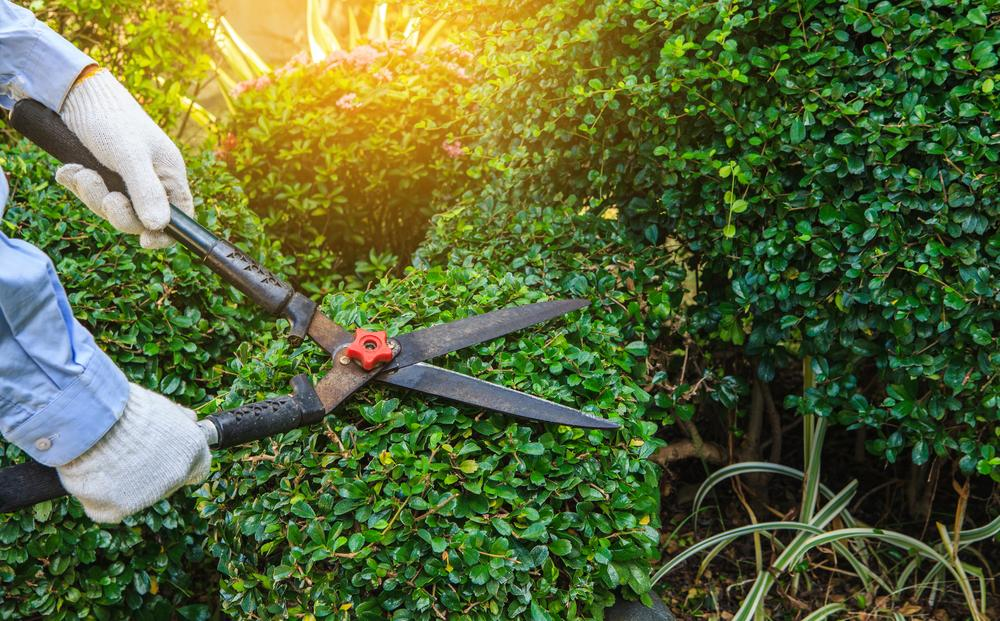 25 Jan Tired of the Same Old Looking Landscape? Give Us a Call for an  Amazing New Look! - Landscaping Company Miami Archives - Frank's Lawn & Tree Service