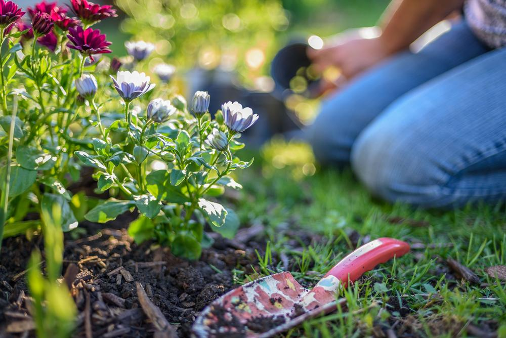 Best lawn care near kendall franks lawn care services for Best garden maintenance