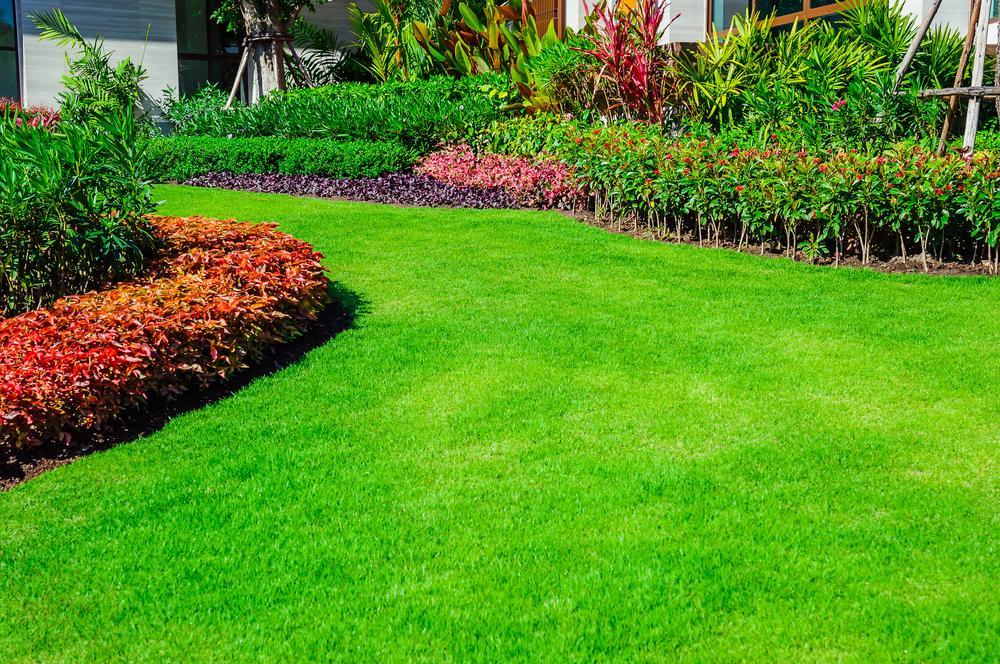 Lawn Repair in Miami