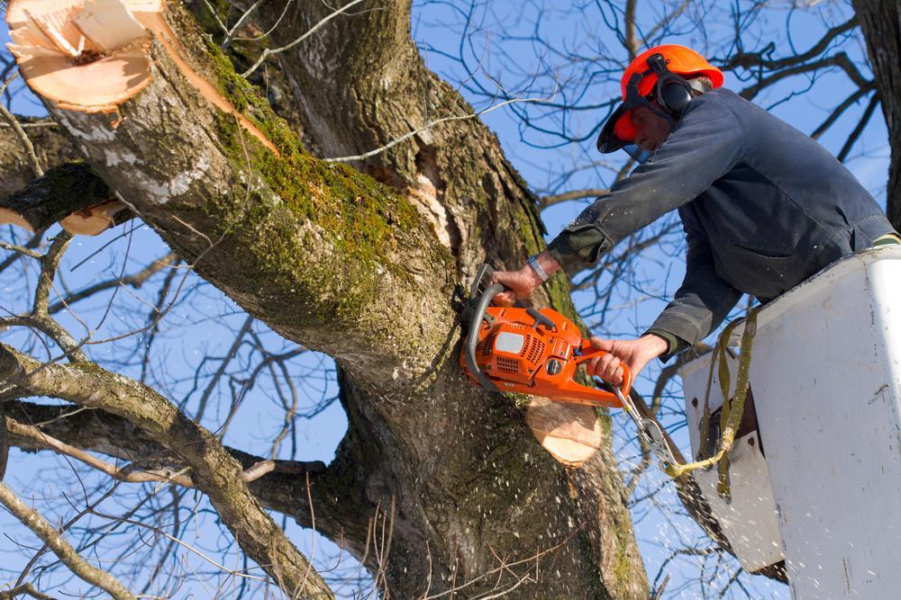 Tree Service in Miami