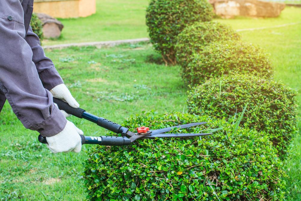 Best Lawn Treatment Company