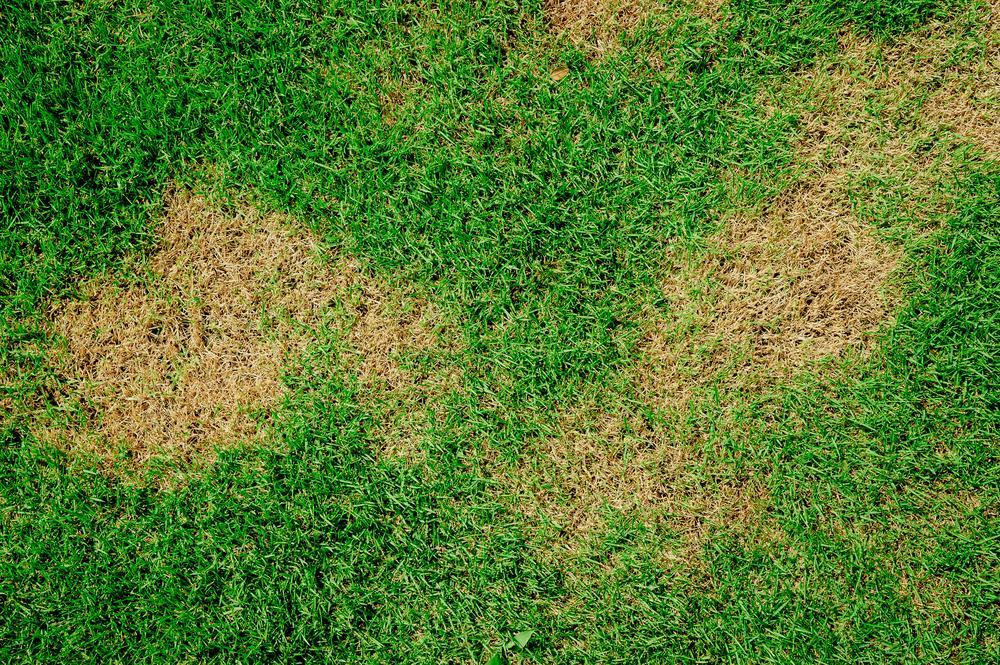 Best Grass Treatment