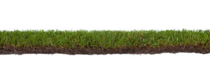Sod Grass Pros and Cons