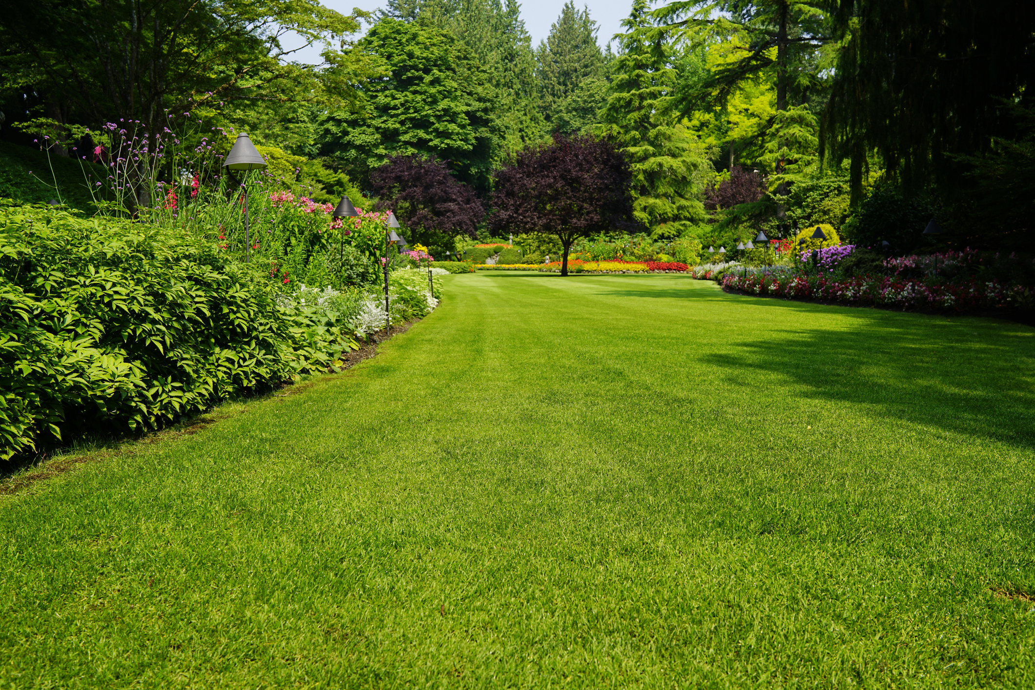 green lawn tips