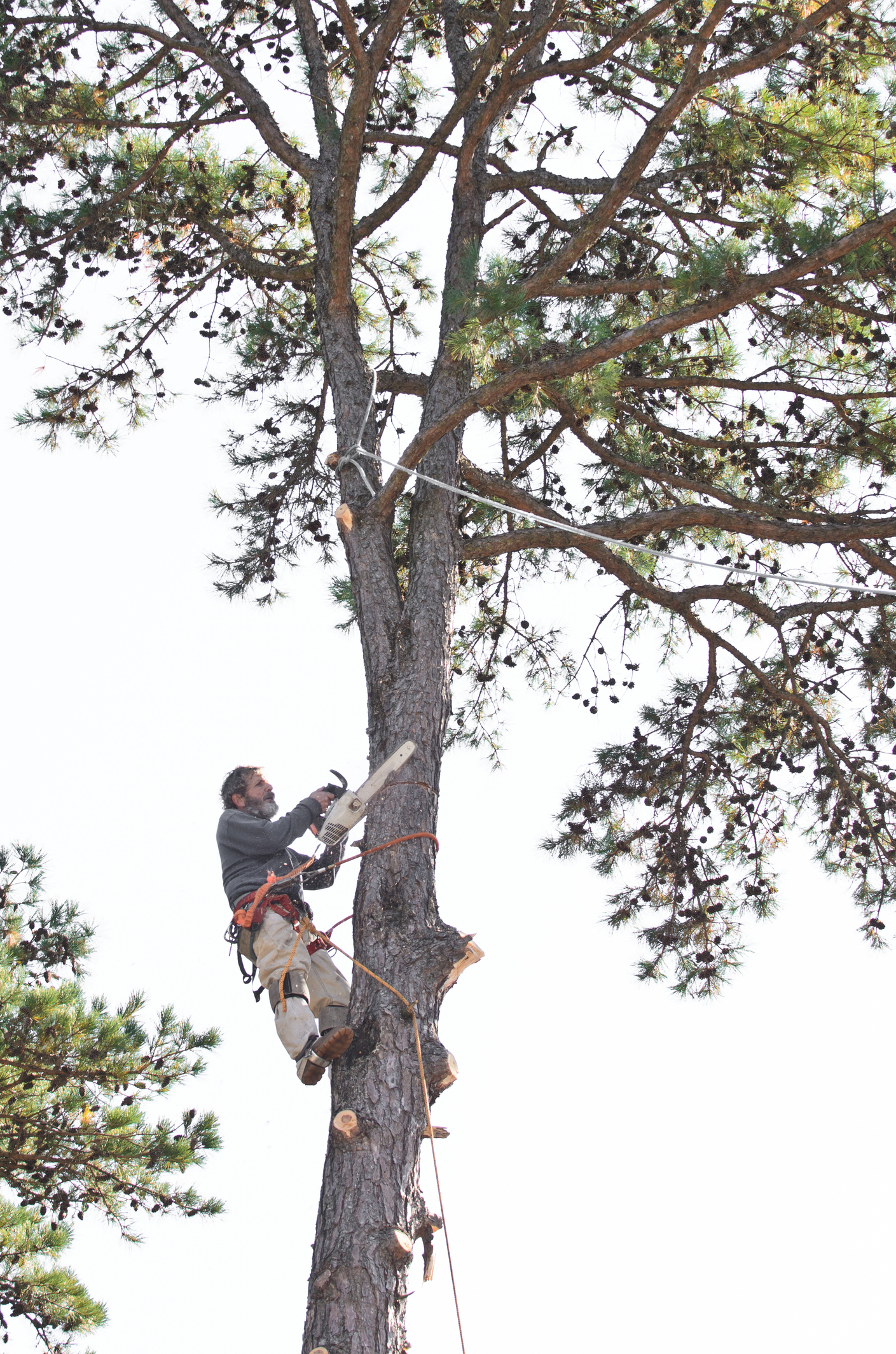Tree Topping