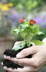 Plant Transplant