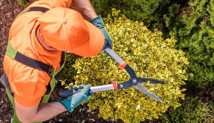 Professionally Maintained Lawn Services in Coral Gables