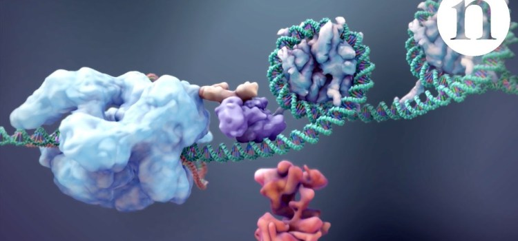 CRISPR: Gene Editing and So Much More
