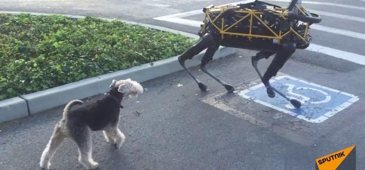What Happens When a Dog Meets Boston Dynamics' Robot Dog?