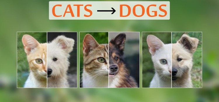 This AI Creates Dogs From Cats
