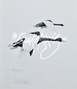 (YPC109) Black Swans 76x51 cm $195