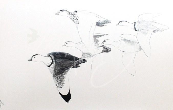 (280) White Pygmy Geese 51x76 cm $125