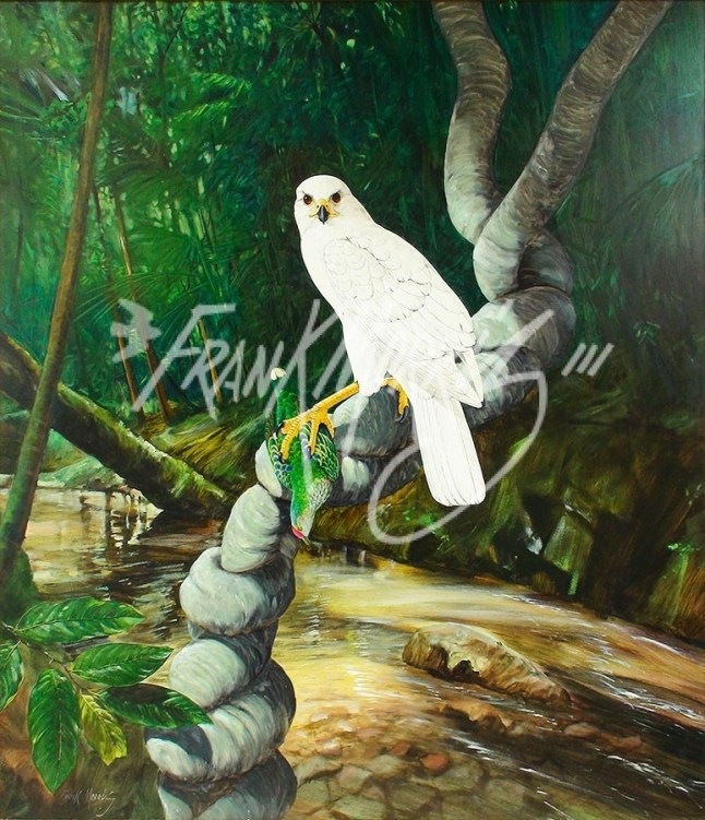 (Y482) 105 x 91 cm Forest Queen (White Goshawk and Rose-crowned Fruit-dove)