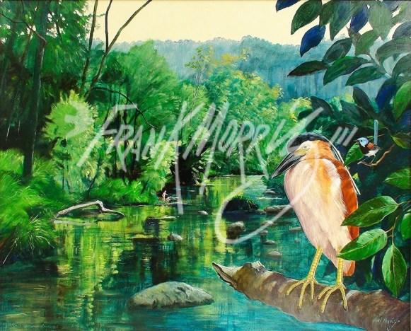 (Y483) 76 x 91 cm Nature's Harmony Awakened (Night Heron and Fairy Wren)