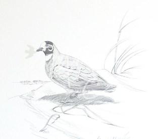 (PD13) Flock Pigeon 76 x 51 cm SOLD