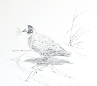 (PD13) Flock Pigeon 76 x 51 cm